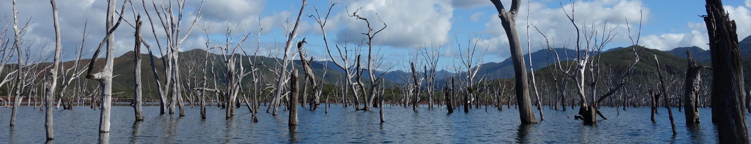Image bandeau forêt noyée Nouvelle Calédonie